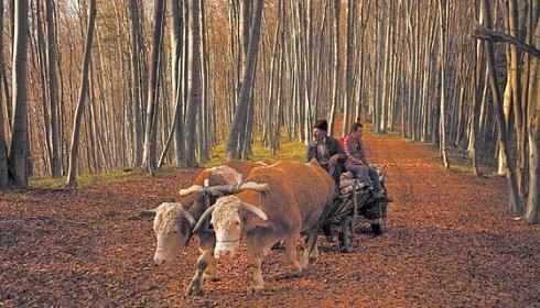 Erdély : elutasította a törvényszék a Bánffy-erdők visszaszolgáltatását